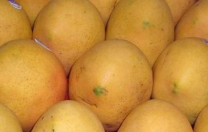 US market presents exciting opportunities for NT mango growers