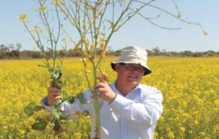 Removing subsoil constraints pays off with improved canola yield
