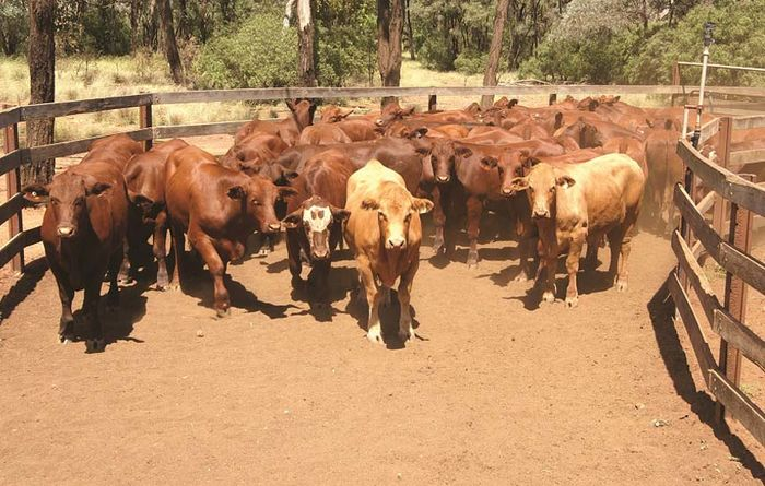 Beef supply tightens