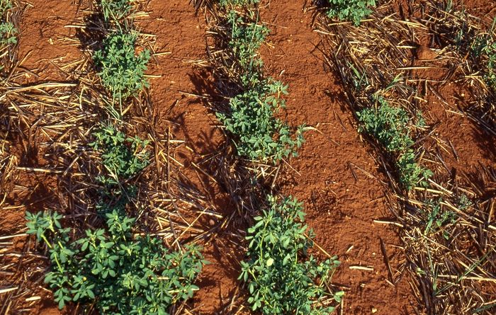 Action to limit spread of lupin disease