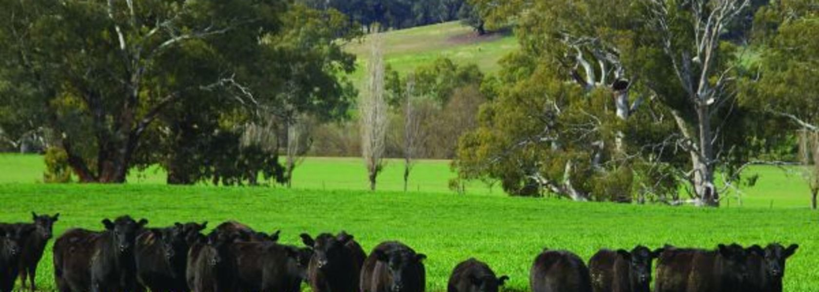 Producers urged to stay focused on biosecurity