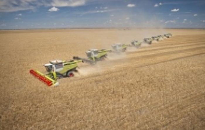 Big line up of Claas harvesters