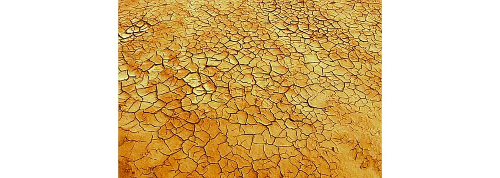 Government rolls out next phase of drought assistance