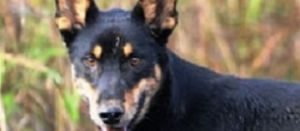 Power to landholder in fight against wild dogs