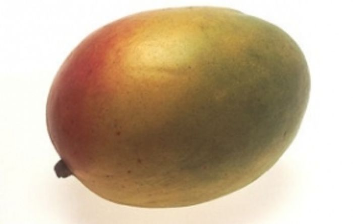 Mangoes ripe for export