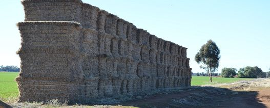 $2.2 million to boost Australian export fodder productivity