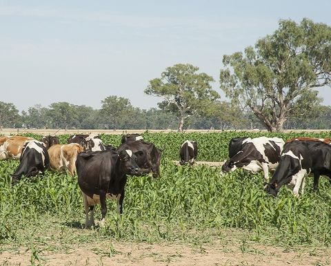 Innovative technology to help feed livestock