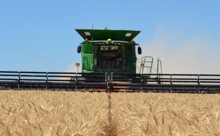 Wheat production to drop to 15.5 million tonnes