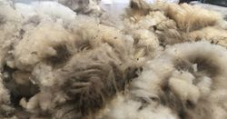 Wool Industry Medal nominations now open