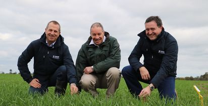 BASF announces new wheat seed varieties