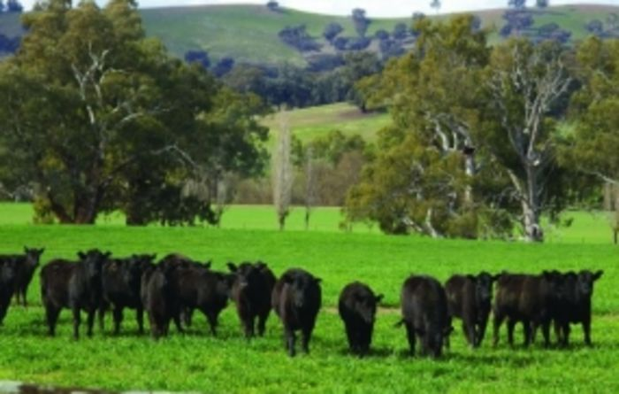 Genomics leads to more productive cattle