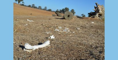 CSIRO work demonstrates devastating effects of drought