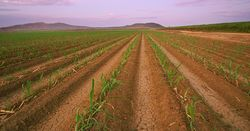 Queensland canegrowers to fast-track testing of high efficiency fertilisers