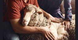Have your say on wool's levy future