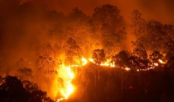 CSIRO to support bushfire rebuild