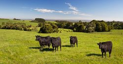Drought impacts Australian beef prices