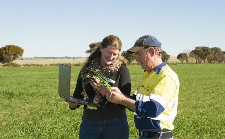 Managing weed seed banks in WA
