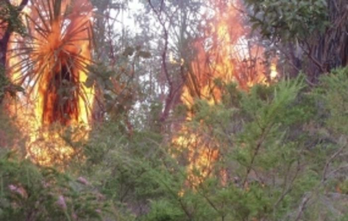 Reduced savanna burning a win for environment and locals