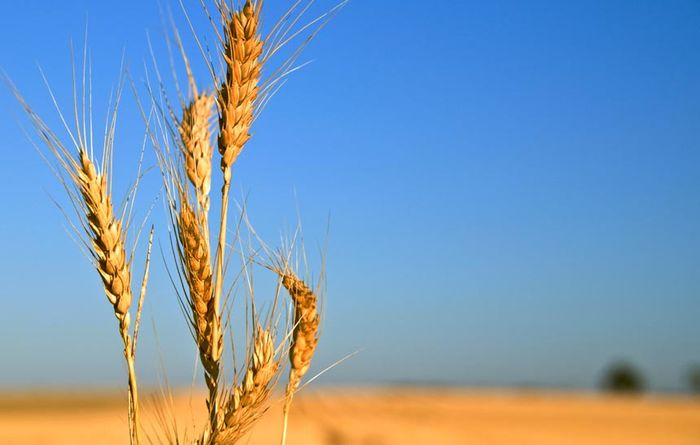 Could global wheat markets be closer to a tipping point?