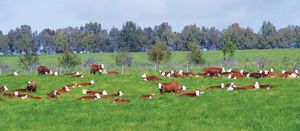 Steps to successful pasture establishment