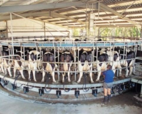 Dairy industry needs free-trade agreement with China: VFF