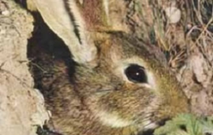 Innovative app to track rabbit control