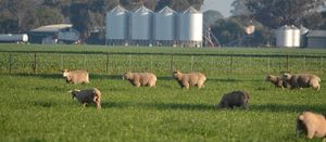 Australia's biosecurity system outlined in new report