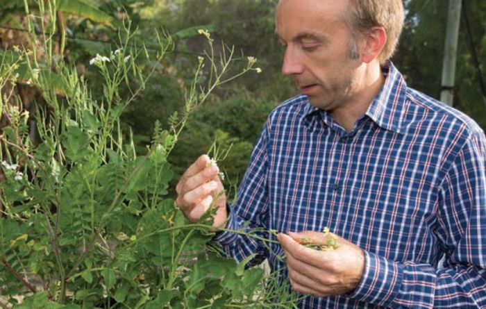 Rapid test could help manage herbicide resistance
