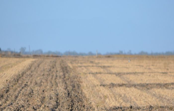 Leasing farmland on the rise