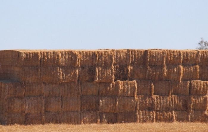Fodder project to improve oaten hay guidelines