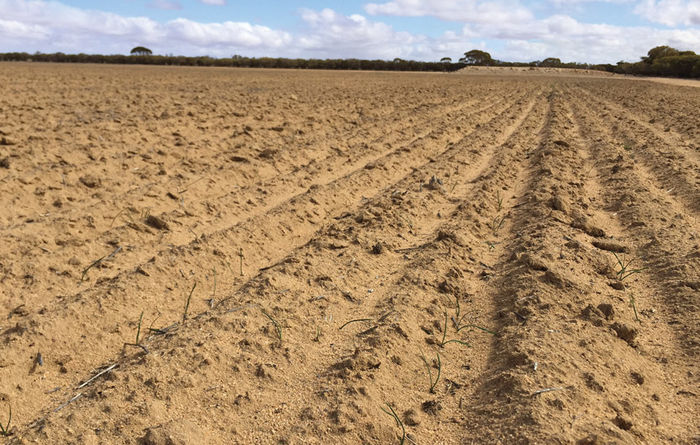 Sustaining soil in a tough season