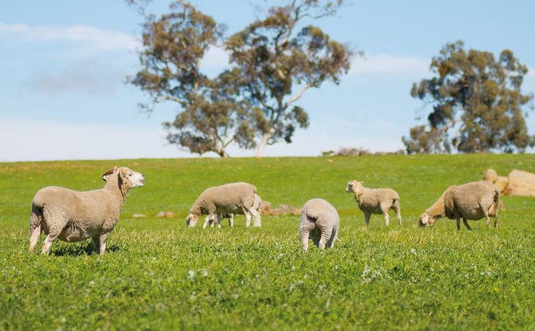 China drives five year high for wool