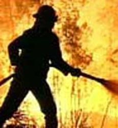 Inquiry into Queensland's firebreak policies announced