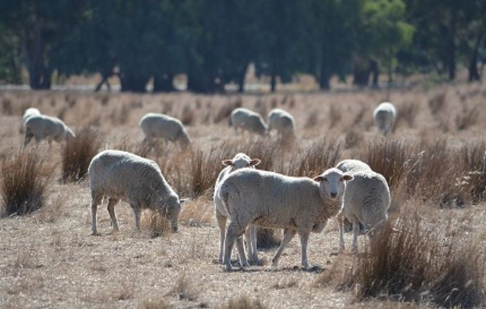 Australian Wool Innovation review calls for submissions