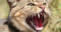 Survey to help tackle feral cat threat