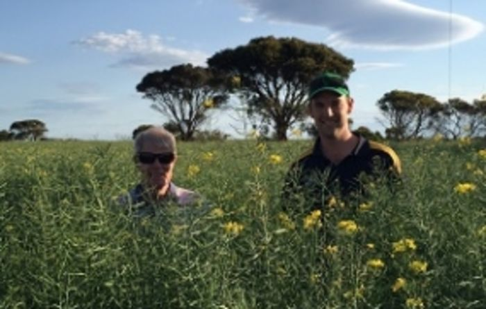 Canola hybrids a perfect fit for WA farmer