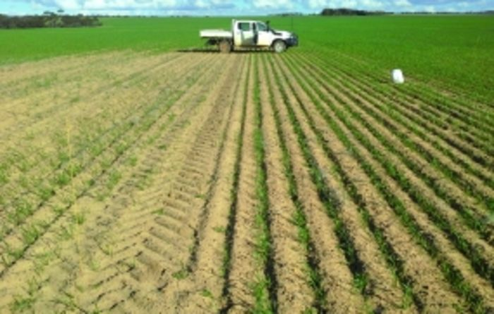 Conserving moisture with a harvest weed spray