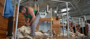 New best practice guide for shearing sheds