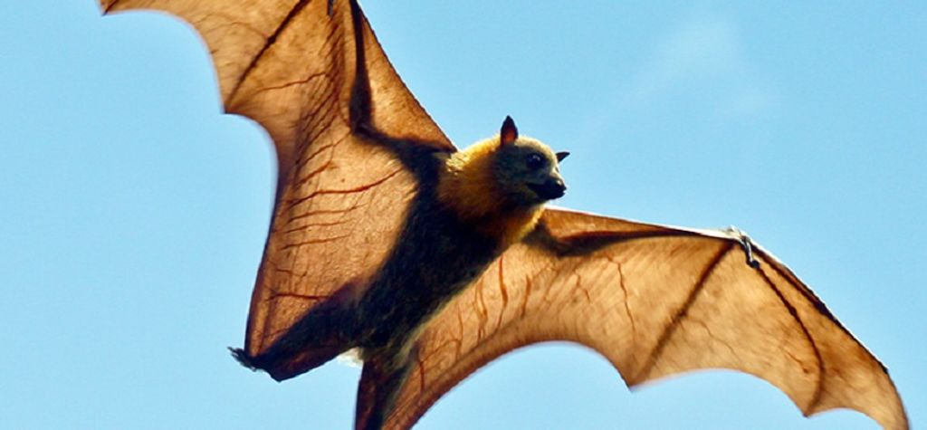 Federal parliament ignores farmers in flying fox review: NSW Farmers