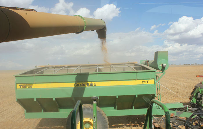 Tips on harvesting frosted crops