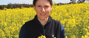 Tips and tools for managing Native budworm in WA canola crops in spring