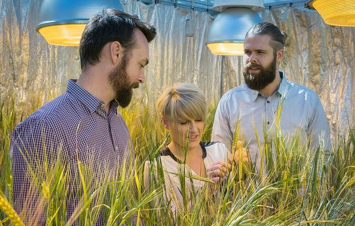 Queensland uni crop gene breakthrough