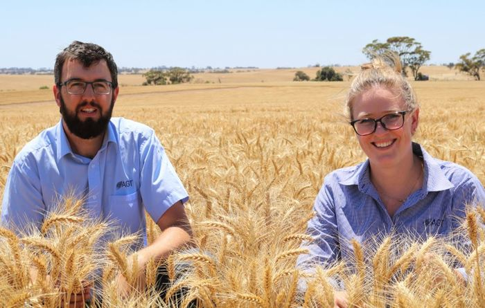 New wheat variety gets Hard nod in WA