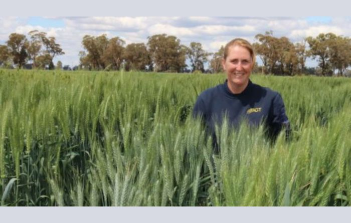 New hard wheat variety from AGT