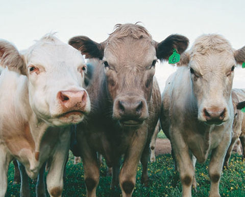 Greater transparency needed in beef industry: ACCC