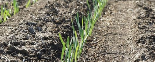 Seed coating research could boost germination