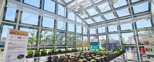 World first clear solar glasshouse opened in Perth