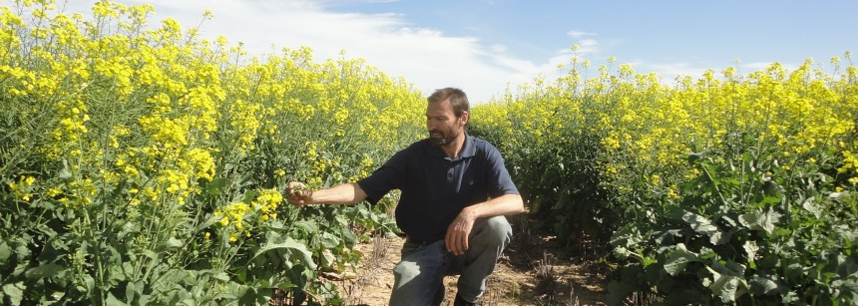 Precision seeding technology shows promise