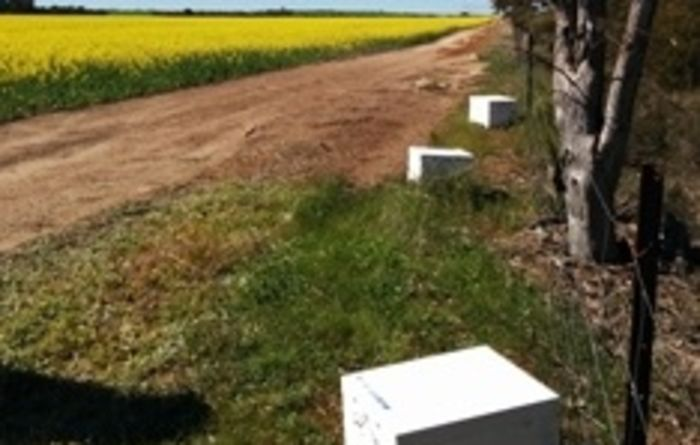 Canola seed treatment impact on honey bee health investigated