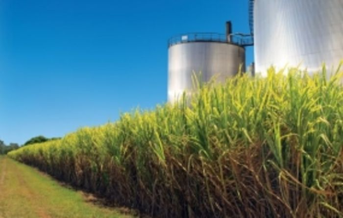 Canegrowers maintain support for drumMUSTER